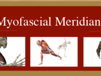 Anatomy of the Myofascial Meridians