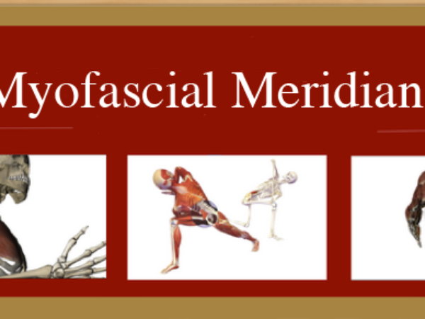 Anatomy of the Myofascial Meridians