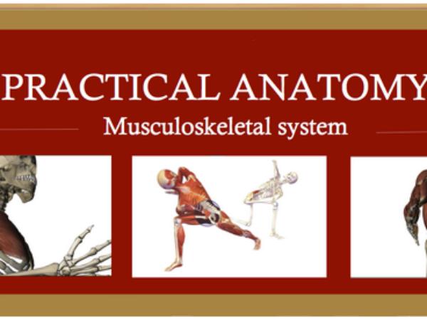 Pratical Anatomy