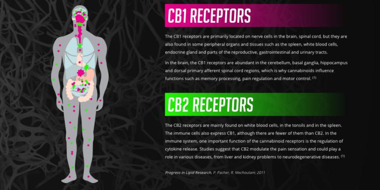 CBD Receptors CB1 CB2