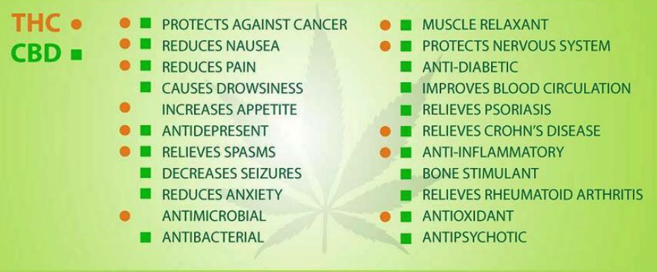 CBD Oil Benefits - Renew Wellness Holistic Institute
